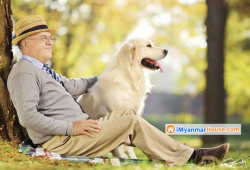 Top 10 Benefits Of Having A Pet At Home