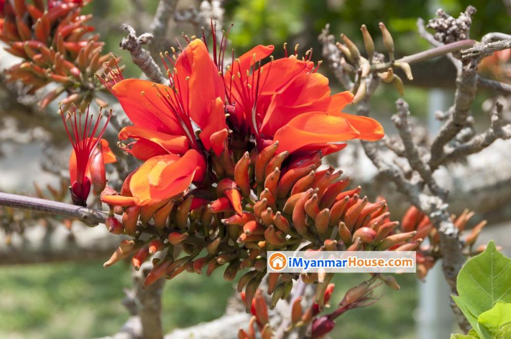 လူသိနည်းတဲ့ ကသစ်ပင်အကြောင်း - Property Knowledge in Myanmar from iMyanmarHouse.com