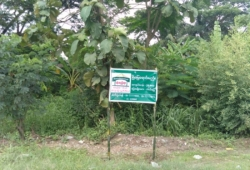 (SL 3-00781) , ရန္ကုန္-ပုသိမ္လမ္းမေမးတင္၊ ထန္းတပင္