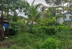 မြောက်ဒဂုံမန္တလေးလမ်းမကြီးမြေသီးသန့်စျေးတန်အရောင်း